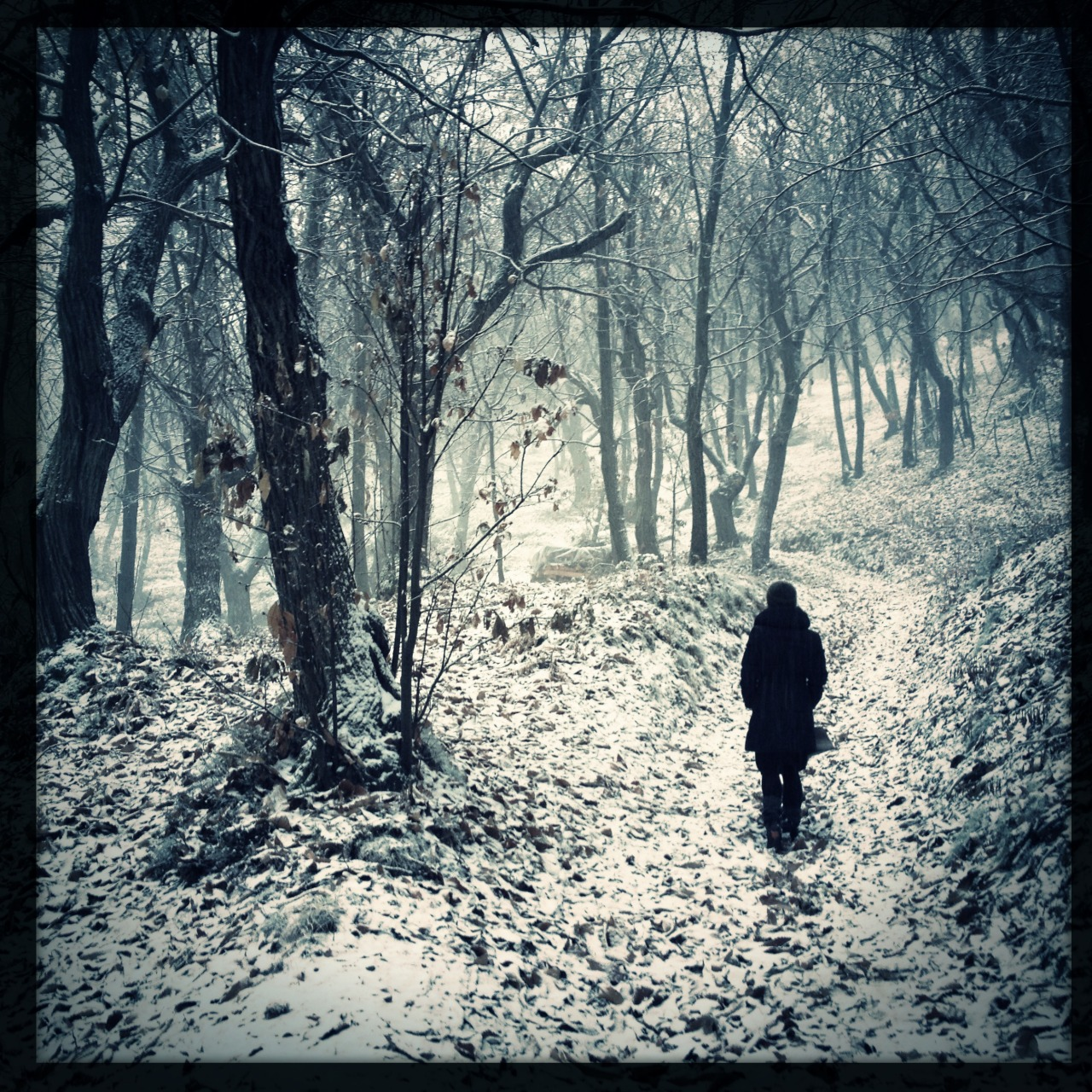 In the forest, while snowing