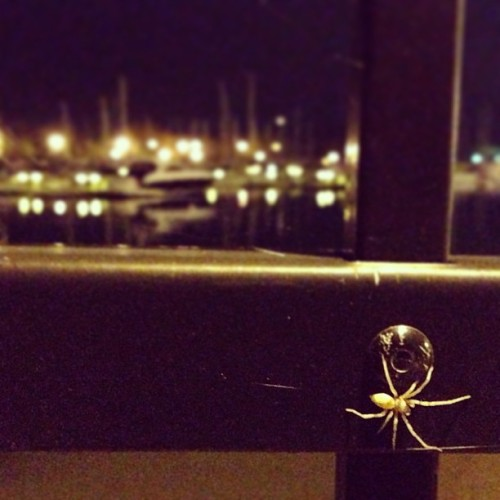 Lovely walk with #RoelsRoyce #chicago #spider #albinospider #night #chillin (at Belmont Harbor)