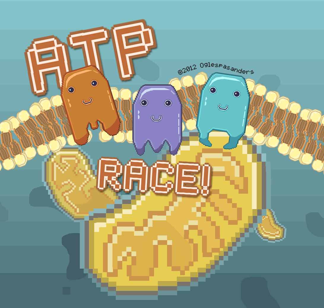 "juliepasini:  ""ATP Race!"" A digital, educational game designed to help high school students better visualize the Electron Transport Chain. Art done by: © 2012 Julianne PasiniCoding and research by: © 2012 Nicholas Saunders and Alyssa Oglesbee"