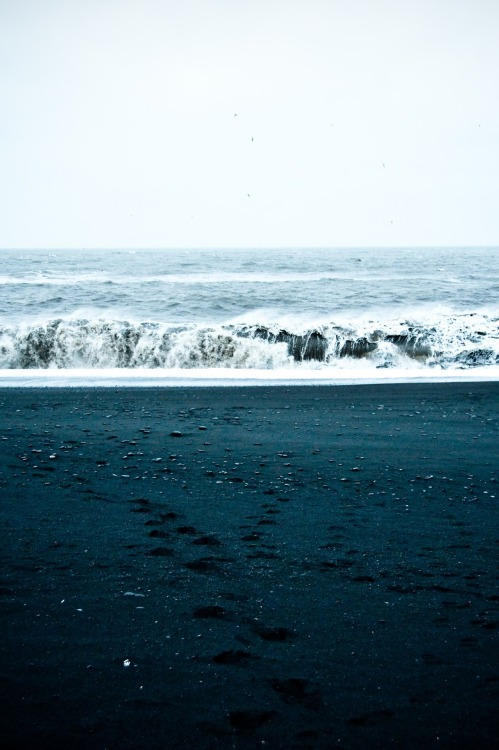 aquaticwonder:  Black Sands