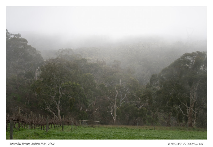 Lifting fog at Teringie, Adelaide Hills by AdamDutkiewicz