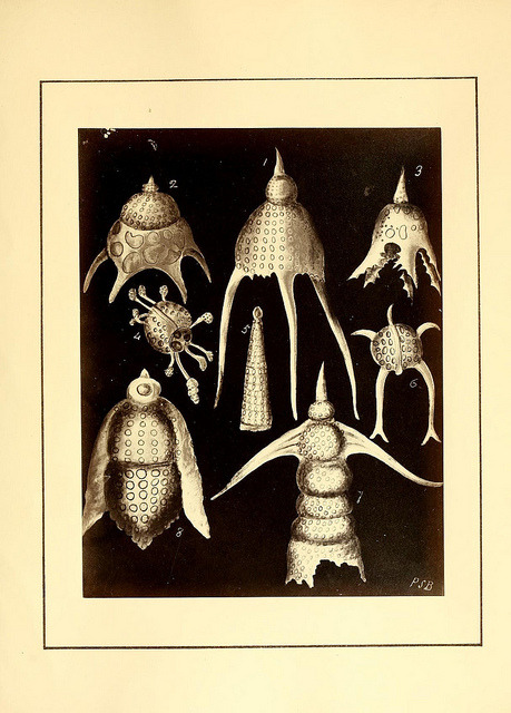 Polycystins, figures of remarkable forms &c. in the Barbados chalk deposit (chiefly collected by Dr. Davy, and noticed in a lecture delivered to the Agricultural Society of Barbados, in July, 1846) by BioDivLibrary on Flickr. London :W. Wheldon,[ca. 1869].biodiversitylibrary.org/page/9996042