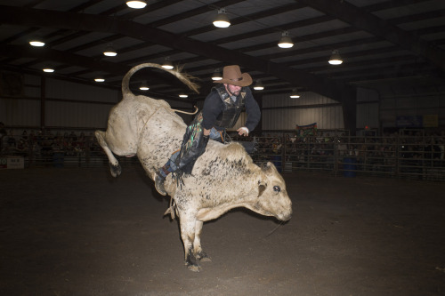 "SOUTHERN EXTREME BULL RIDING - ABINGDON, VIRGINIA Every Tuesday night for several months in the winter, the Washington County Fairgrounds' largest building is warmed by giant space heaters so that a crowd of hundreds can root for their favorite bull rider. In the front of the building, the crowd sits in the bleachers laughing at the clown who is doing a goofy dance while they wait for the gate to burst open. He chats easily with regulars while throwing down the donated hat in the front that will be ""signed"" (stomped on) by the upcoming bulls. In the back of the building, the well-oiled machine comprised of cowboys and locals begins. Bulls are walked through intricate chutes to keep them calm and secure. Eventually, they make their way to the small compartment at the end, just big enough for them to stand. The next man up has been stretching, preparing his personal rope and glove with heated-up rosin. He's getting in the zone. The usually cocky guys with colorful chaps, wild boots and bull-legged swagger are quiet. They seem to be playing out over and over in their head the perfect eight seconds. Several cowboys stand near for safety reasons. Then, the cowboy slowly lowers down on top of the bull and tightens his rope around the giant beast's belly. Time slows down and the man nods at the gatekeepers. One man hits the latch. Another man pulls on the lead that has been clipped to the gate so that it flies open. The bull is out, bouncing from his front legs to his back legs, desperately trying to knock the rider off of his back. The rider tries to counter balance and stay upright. If it happens like his vision, he will soon hear a bullhorn and have lasted to the magical eight second mark. And when the horn blows, the rider dismounts and tries to jump free of the spiraling, jumping animal. Then, the bullfighters jump into action and motion in front of the bull — sometimes even tapping their horns — so that the bull will move away from the recently freed rider. Most bulls find the open gate attractive and trot gently back. Sometimes the bulls will not head right in, which is affectionately called ""taking a victory lap"" — looking for someone or something to bump or chase. The well trained fighters do an intricate dance, the crowd is directed to yell, ""go home,"" in unison and the cattle dog is called out to nip at his heels. Other entertainment includes games of skill for the audience and ""fan of the night"" for the fan who danced and cheered the most. ""Mutton Busting"" is when young children, who idolize the riders, get their chance to try something similar. They are placed atop a sheep and hang on for dear life while the small animal runs. Some kids fall and immediately burst into tears. A few will jump up and mosey over to the gate to climb over like the big guys. The kid with the highest score will get a crisp ten dollar bill and an itch for adrenaline. The activities and riding continues for a couple hours. There are triumphs and disappointments and injuries. The night usually ends on a high note with loud music and lots of prizes handed out to the crowd. The cowboys move up and down in ranking from their evenings scores. It all happens again the next Tuesday night. * * * Tammy Mercure is a State Guide to Tennessee. She was recently named one of the ""100 under 100: The New Superstars of Southern Art"" by Oxford American magazine.  Follow on Tumblr at tammymercure or on her website, TammyMercure.com. Support her work at TCB Press."