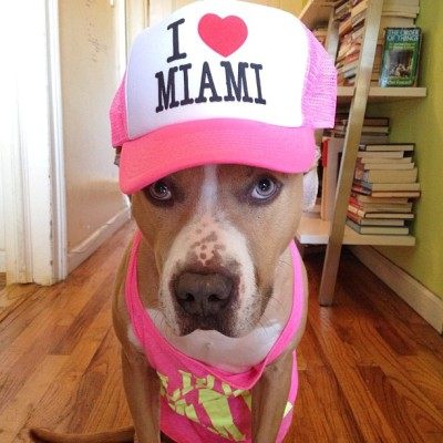 Who's ready to party in Miami with me? #stuffonelleshead #ellethedog