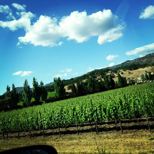 Hello beautiful napa.