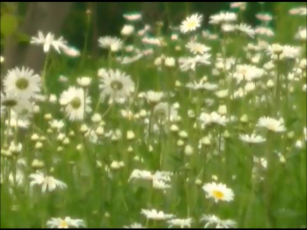 video frame from home movies/notes.  —- daisies —-