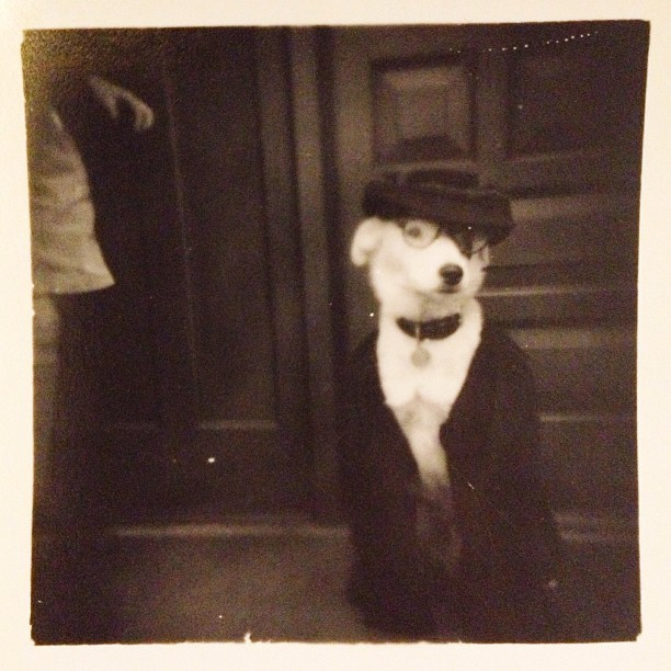 Dogs were definitely classier in the 50s