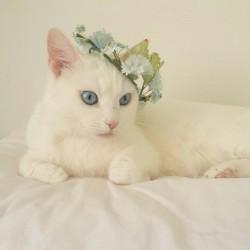 hello kitty may,hello kitty totinfo about catcats breeds,funny cats videofree kittenboy cat names,cheap cat littelysine for catcats name,puma cacheap cat foohello kittyc,kitty clothin