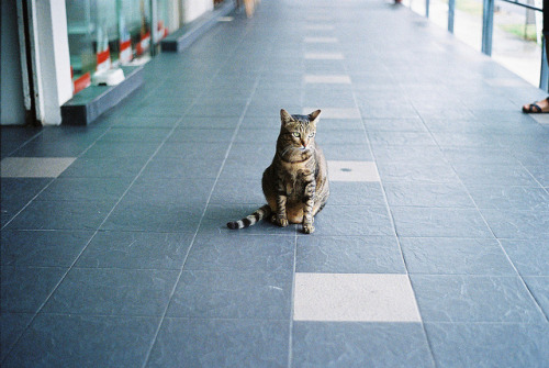 aliterate:  untitled by xmichh on Flickr.