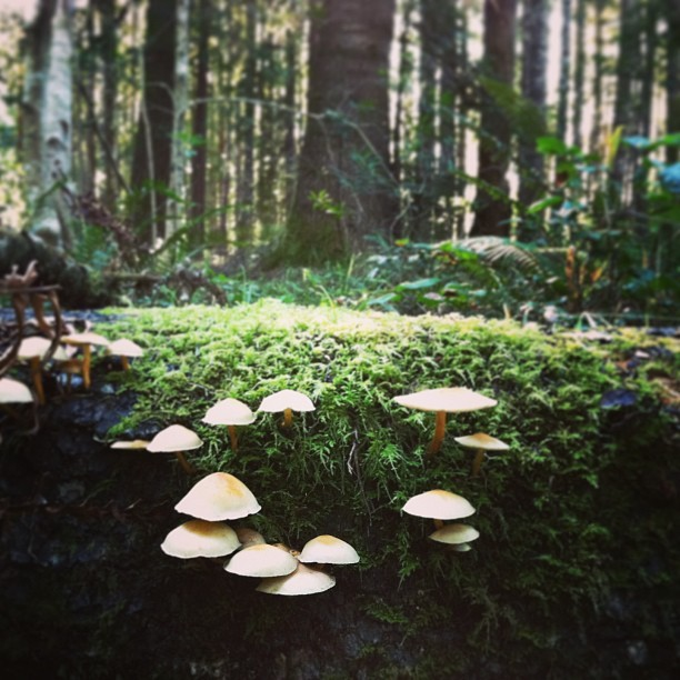 #redwoods #mushrooms #forest #fungalfriends