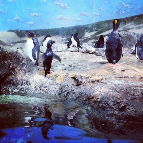 Guys, today is #WorldPenguinDay and no one told me! #penguin #penguins #love