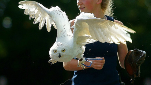 hpinsults:  Harry Potter fans buy pet owls, then dump them Owls are becoming popular pets thanks to Harry Potter, but what happens to them once the fantasy fades?