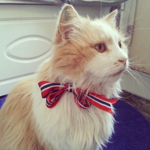 drugsandrainbows:  Happy birthday Norway! Even Simba is festive today :)