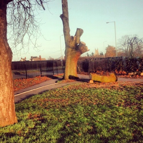 #tree #cut #deserted #canterbury