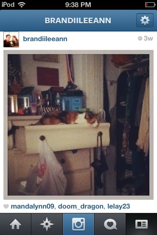 get out of there cat. i know i should have closed my drawer but leaving it open was not an invitation for you make it your bed.