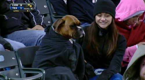 buzzfeedsports:  Dogs are awesome