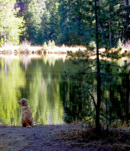 My dog and best friend Leon and I at a lake. I love him lots.