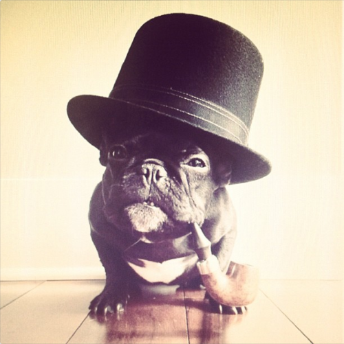 dogs in top hats, my favorite blog
