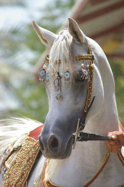 horse-whisperer:  Gorgeous horse is gorgeous!