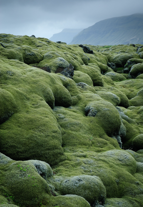 ecocides:  Lava fields | image by the london eye