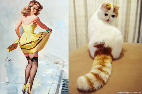 Seriously. Follow this blog immediately: Cats That Look Like Pin Up Girls