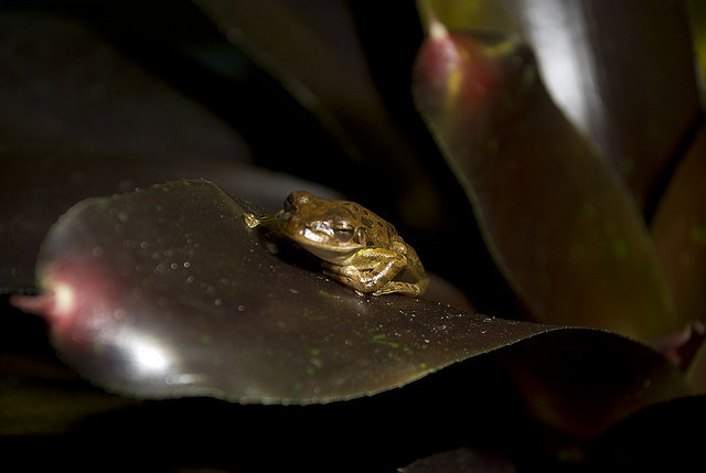Frog I by photorick00 on Flickr.