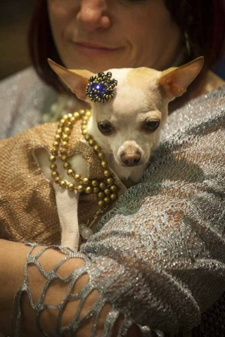 BITCHES IN PEARLS; OR, DOGS IN COSTUME!by Parry Ernsberger http://bit.ly/XKq1CE