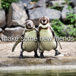 youwannado:  I wanna make some new friends