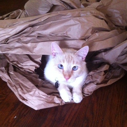 Hyde now has a crinkle paper palace.
