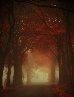 wanderlusteurope:  Autumn in Drenthe, Netherlands