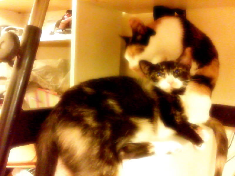 So tired, so here's my two calicos in a snuggle fest on top of my pc tower.