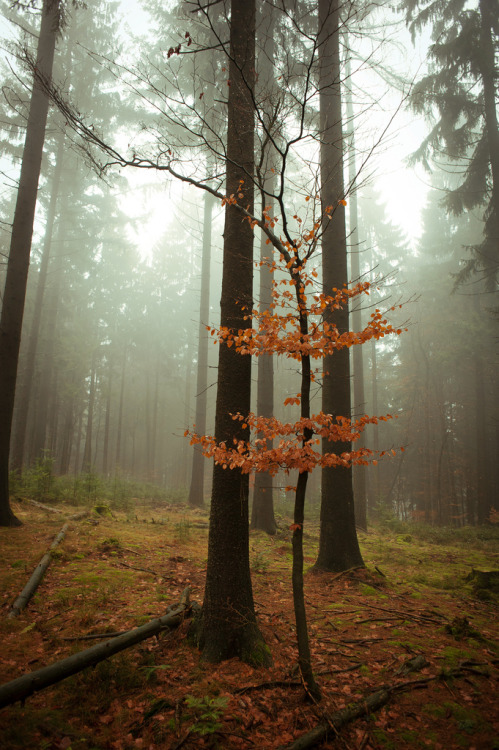 unwrittennature:  **temporary pleasure (by Livia Lazar)