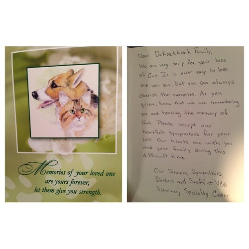 Got a nice card in the mail from the animal hospital. #RIPGus