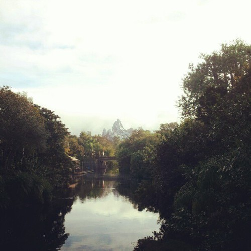 This view #disney #dak