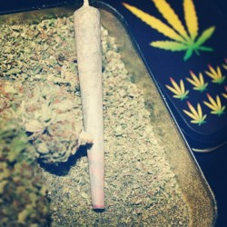 whenindoubtsmokeitout:  #joint