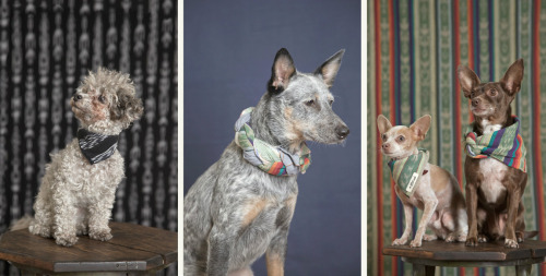The Hill-Side Lookbook SS12: Menswear Dogs before Menswear Dog.