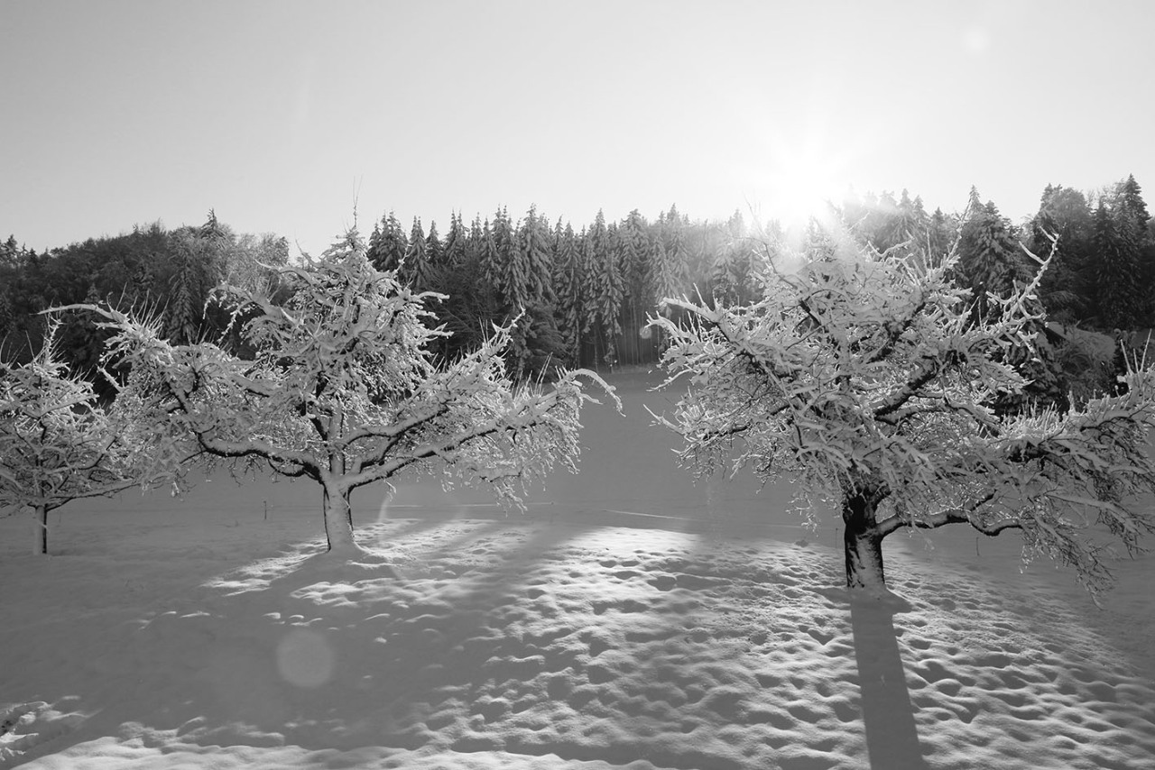 Hobbyfotografie, Winterwonderland© www.absolutely-D.com
