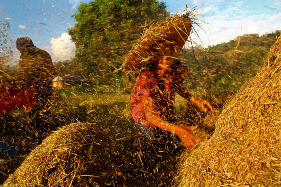 Photo of the Day: Once rice is harvested, women like Srilanka Yangani (73) work from dawn to dusk thrashing the grain. The work is dismally paid, damaging to health and leaves little to nothing that can be saved for retirement years. Photo by: GMB Akash (Narayanganj, Bangladesh ); Philippines