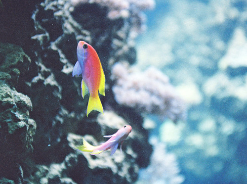 timber-wheels:  dream-fish (by Daria Svertilova)