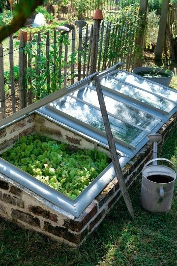DIY Mini Greenhouse! As Chinese medicine teaches and Hippocrates said best: Let food be thy medicine and medicine be thy food.