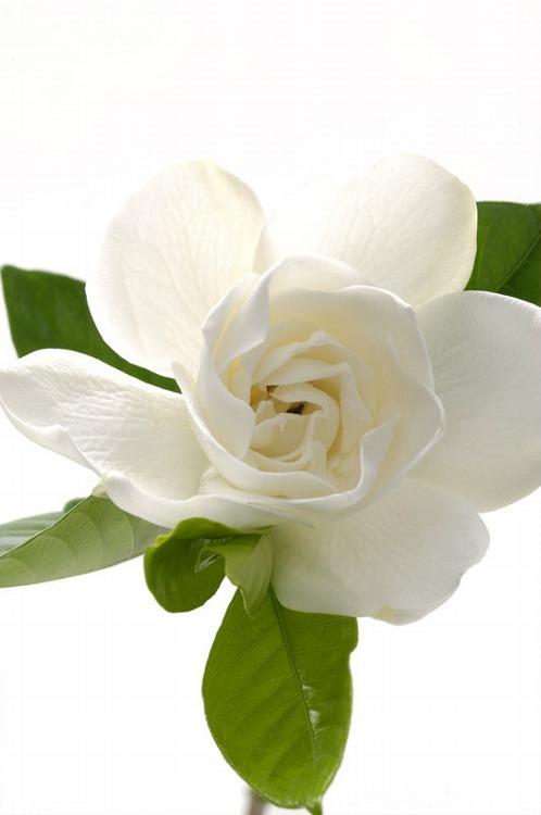 hannahandfay: Blossom