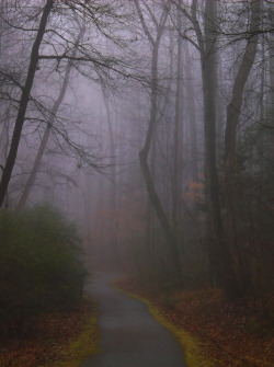 wynndy:  Following the path on a chilly morning.