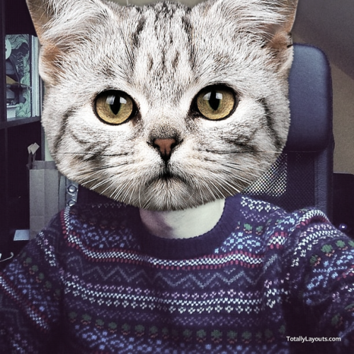 totallylayouts:  I turned myself into a cat. ReplaceYaFace.com