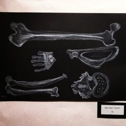 Pretty good use of chalk and drawing of bones for grade 4. #bones #chalk #elementary #art