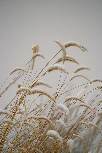 wistfullycountry:  Seasonal Simplicity by doc030395 on Flickr.