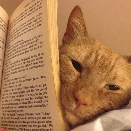 Last one. #books #cats