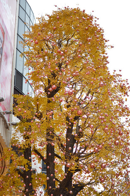 Ginko Leaves and Pink Ornaments on Flickr. A ginko tree decorated with pink ornaments for the seasons:) 12/17/12