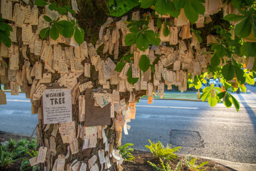 bobcronkphotography:  The Wishing Tree - People are encouraged to post their wishes on this tree in NE Portland.  Pen and wishing tags are provided.