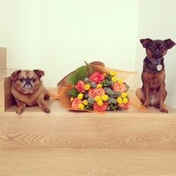 blainedanzig:  Happy Step-Mother's day and Doggie-Mama day. Now feed us!