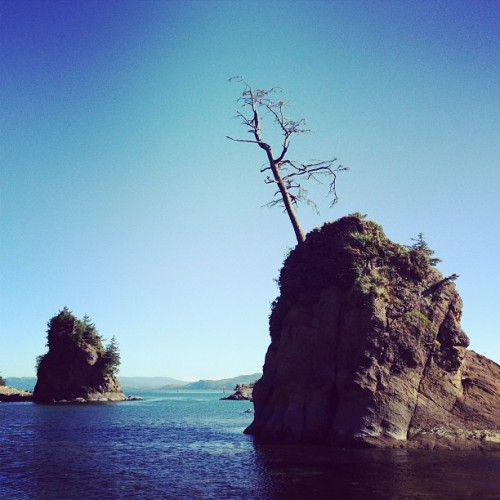 My new favorite tree. #oregon #photooftheday #tree #mytravelgram #ocean #sky  (at Port Of Garibaldi)